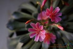 Blüten4